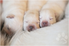 Little sweet noses.