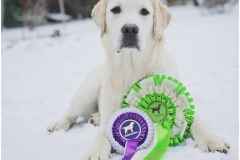 Best In Show-2 Puppy at Finnish LRC´s Main Specialty Show 28.1.2017